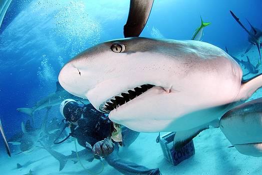 Grey Reef Shark by Liudmila Di