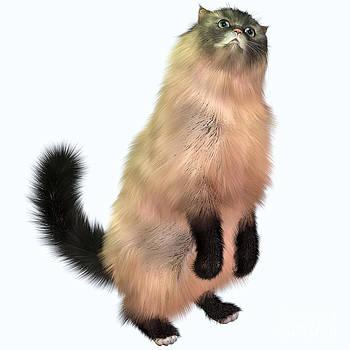 Corey Ford - Grey Tabby Cat