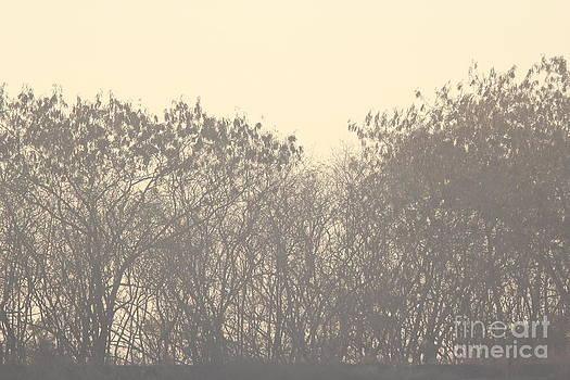 Grey by Vishakha Bhagat