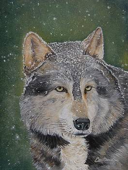 Grey Wolf by Connie Rowsell
