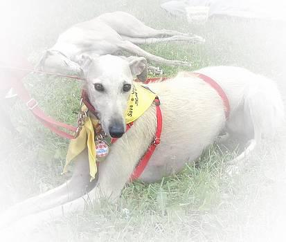 Greyhound Rescue 7 by Jackie Bodnar