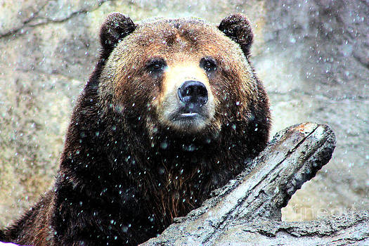 Nick Gustafson - Grizzly Bearly Snowing
