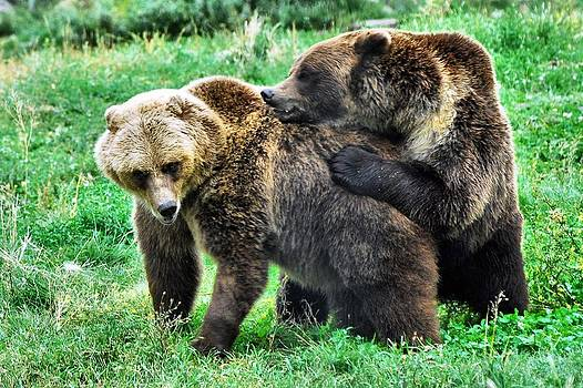 Grizzly Love by Don Mann