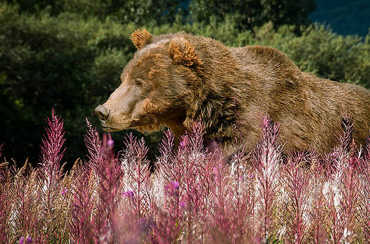 Grizzly by Stephen Smith