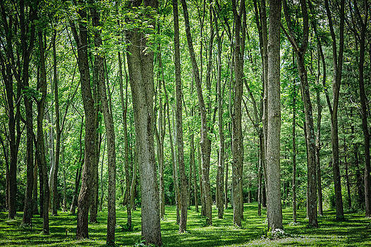 Grove of trees by Kelley Nelson