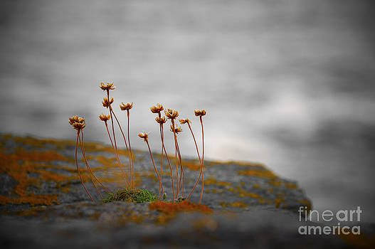 Svetlana Sewell - Growing on a Rock