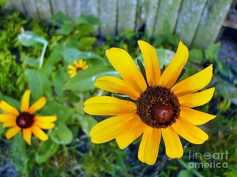 Growing Sunshine by Chris Shadwick