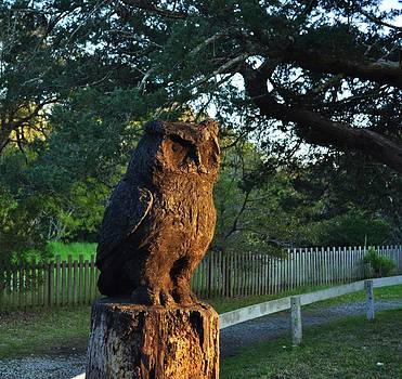 Guardian Owl by Jeff Moose