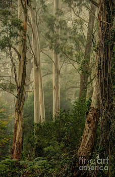Guardians of The Mist by Philip Johnson
