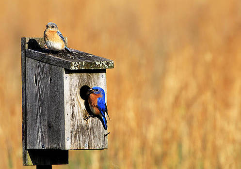 Guarding the Nest by Sharon Batdorf