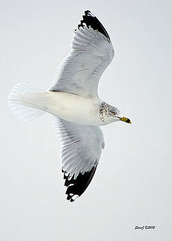 Gull Fly-By by Stephen  Johnson
