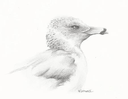 Gull Study by Meagan  Visser