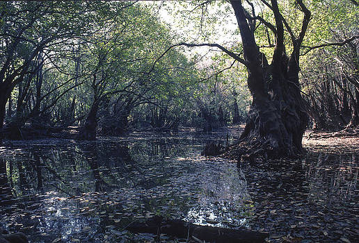 Gum Swamp by Gerald Grow