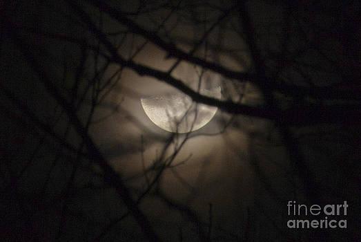 Jonathan Welch - Half Moon