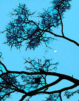 Half Moon by Wide Awake Arts