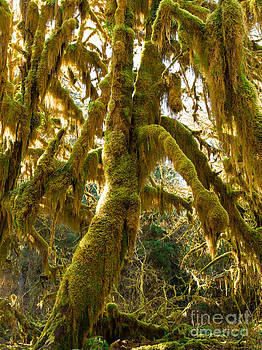 Hall of Mosses  2a by Tracy Knauer