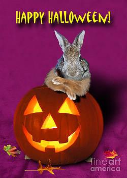 Jeanette K - Halloween Bunny Rabbit