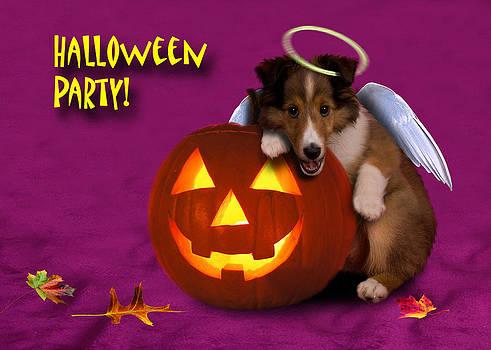 Jeanette K - Halloween Party Angel Sheltie Puppy