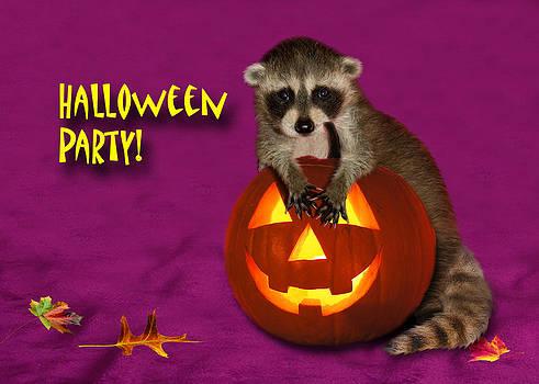 Jeanette K - Halloween Party Raccoon