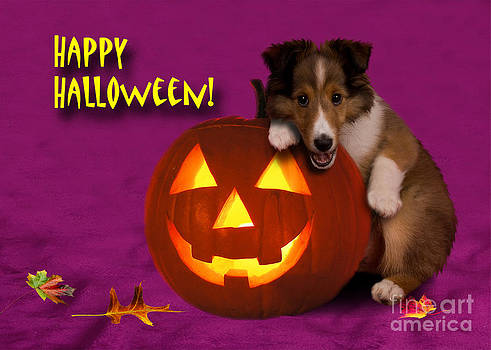 Jeanette K - Halloween Shetland Sheepdog