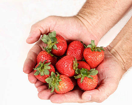 James BO  Insogna - Handful of Strawberries 2