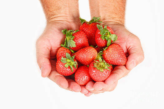 James BO  Insogna - Handful of Strawberries