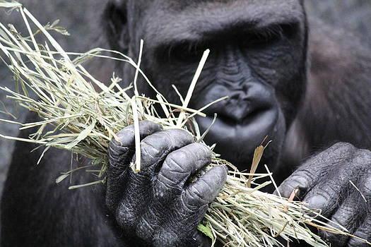 Rosanne Jordan - Hands of A Gorilla