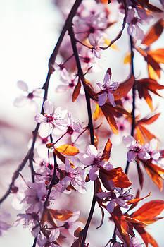 Jenny Rainbow - Hanging Around. Pink Spring in Amsterdam