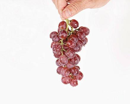 James BO  Insogna - Hanging Grapes