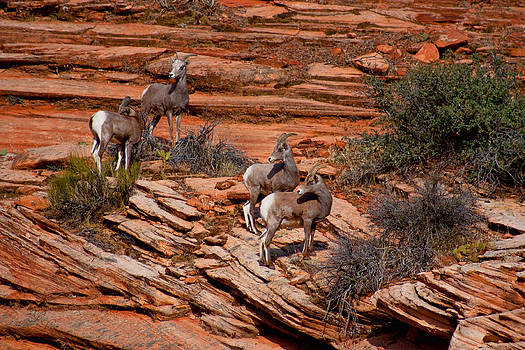 Hanging in the Cliffs by Rick Lewis