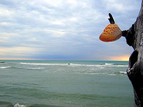 Hanging Shell by Barry Miller