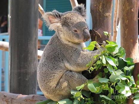 Happy Calm Koala by Ausra Huntington nee Paulauskaite