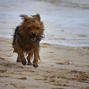 Xueling Zou - Happy Dogs 3