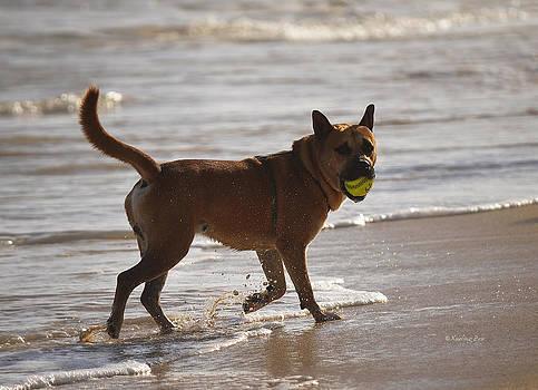 Xueling Zou - Happy Dogs 7