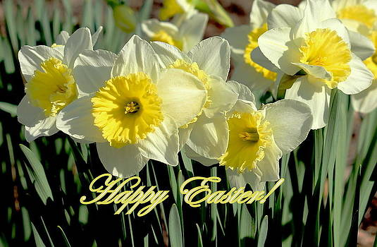 Rosanne Jordan - Happy Easter Daffodils