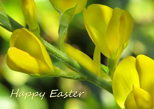 Happy Easter by Mariola Szeliga
