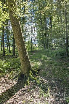 Happy Forest by Bruno Santoro