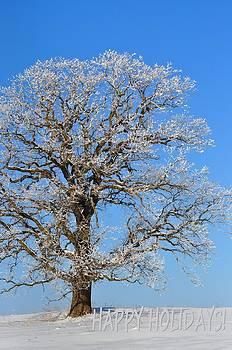 Happy Holidays Frosty Oak by Diana Nigon