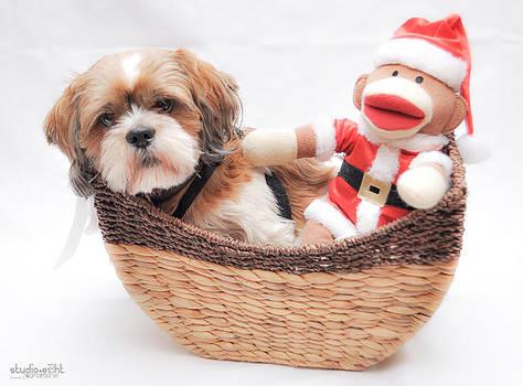 Happy Holidays by Sarai Rachel