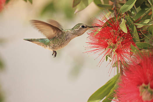 Happy Humming by Penny Meyers