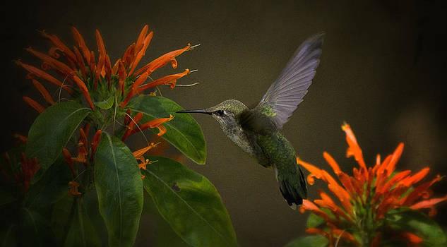 Saija  Lehtonen - Happy Little Hummingbird