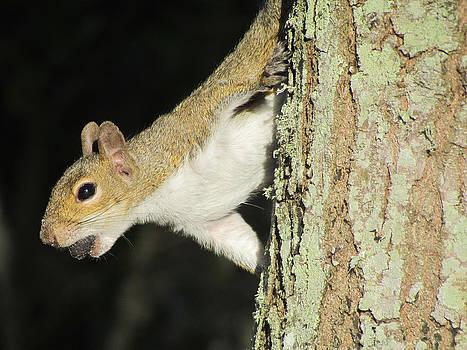 Happy Squirrel by Carol Kinkead