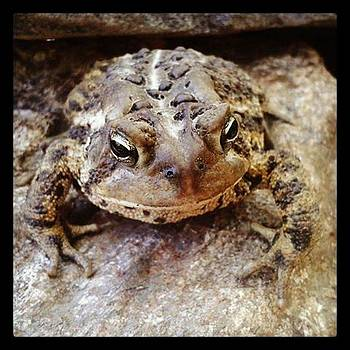 Happy Toad by Devin Stone