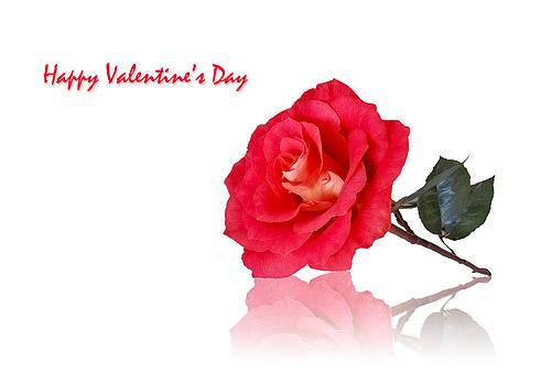 Happy Valentine's Day by Mariola Szeliga