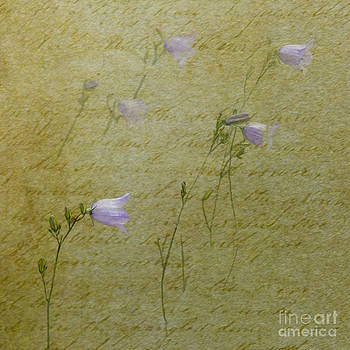 Liz  Alderdice - Harebells
