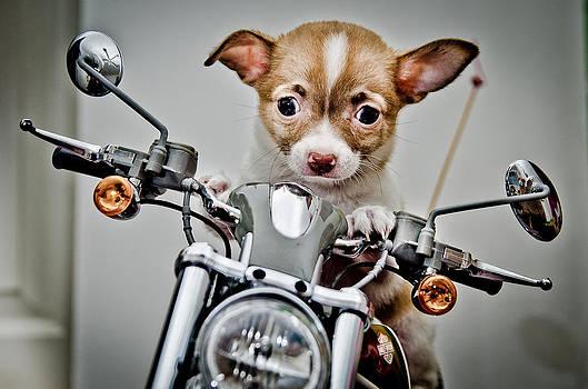 Harley Hog by William Shevchuk