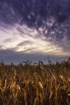 Harvest corn at sunset by Michael Huddleston