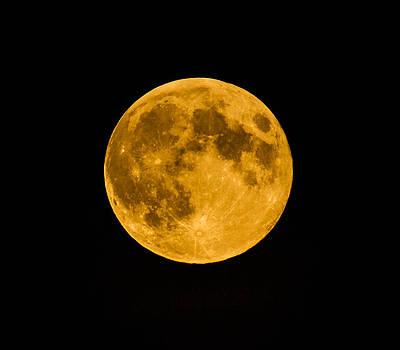 Harvest Moon August 2014 by Danielle Silveira