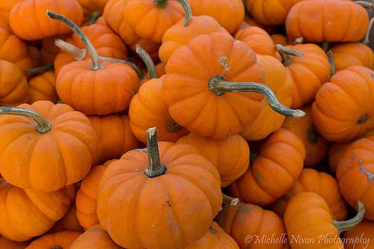 Harvest Orange by Michelle Nixon