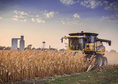 Harvesting the Corm by Dawn Romine